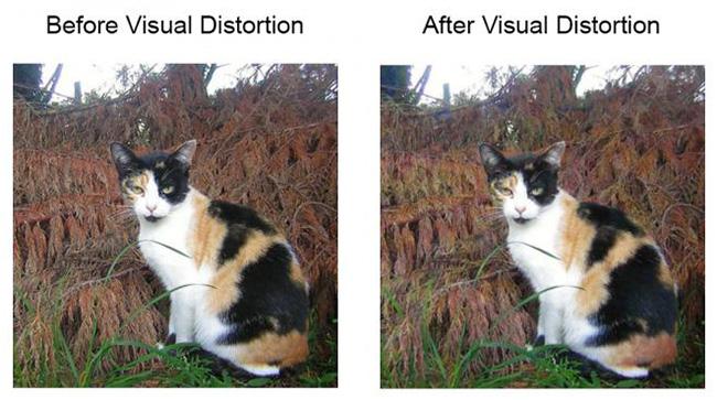 photos online algorithms